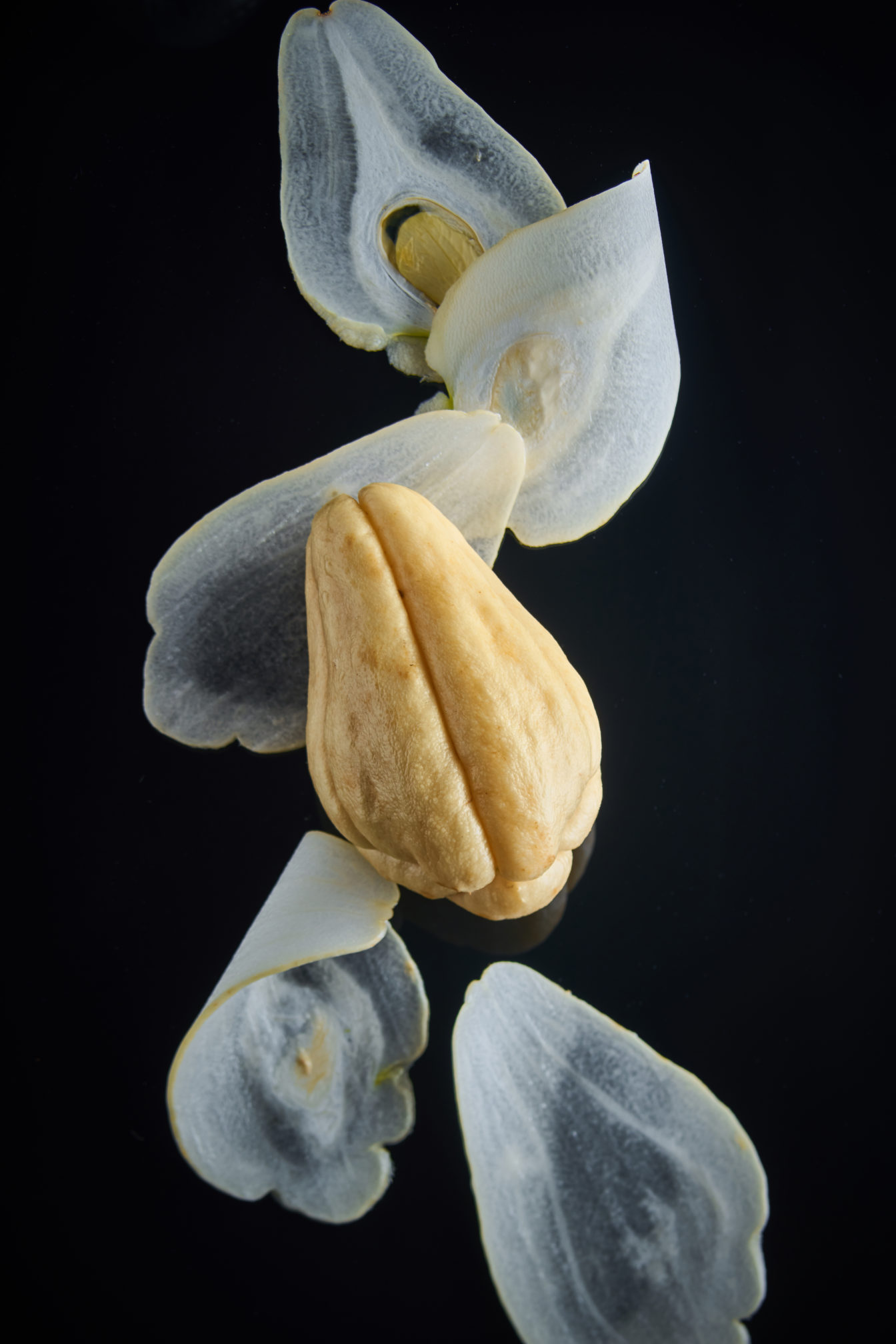 capexo-lilot-fruits-exotique-chrisophine-chayotte-blanche-france