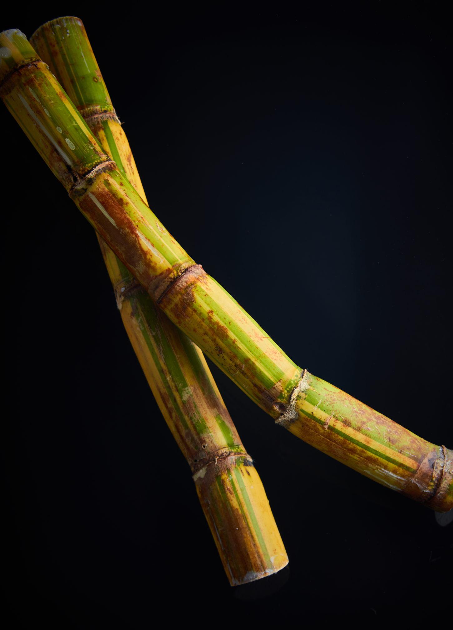 capexo-lilot-fruits-exotique-canne-à-sucre-costa-rica-antilles