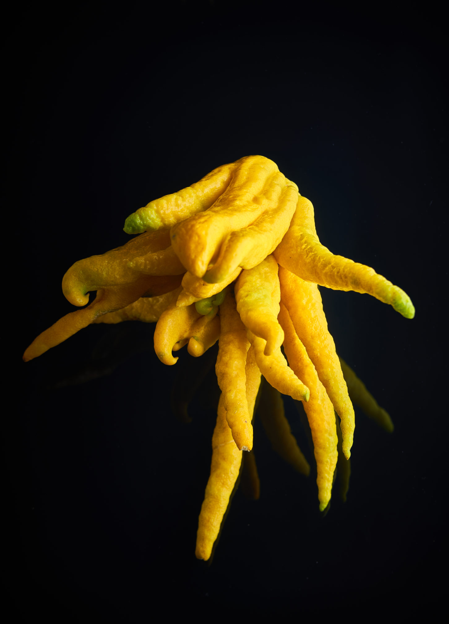 capexo-lilot-fruits-exotique-main-de-bouddha